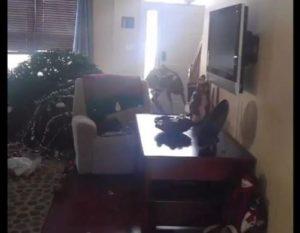 deer-livingroom